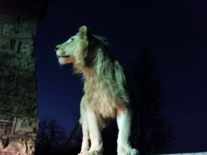 White lion by moonlight